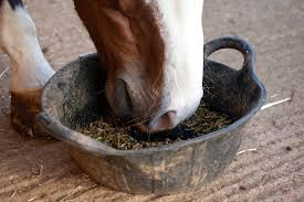 Horse Feed Click & Collect Only.